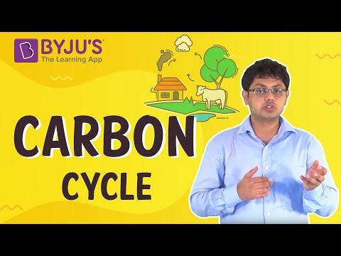 Class 6-10 - The Carbon Cycle