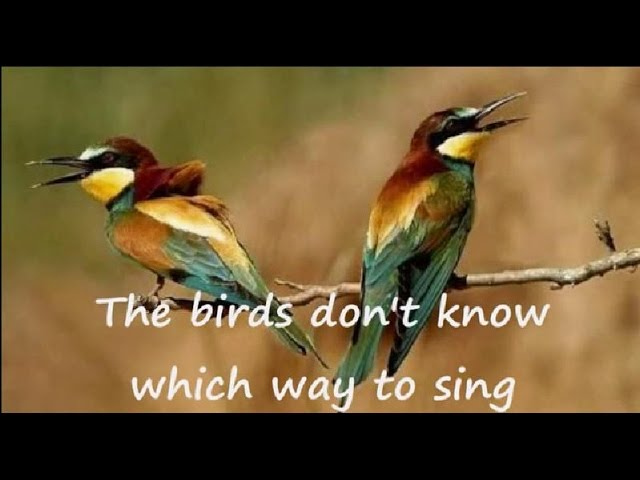 peter-hammill-the-birds-lyrics-on-clip-version-of-the-love-songs-rapunzzl
