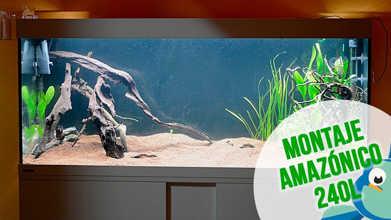 Montaje acuario amaz nico 240 litros decoraci n y pri - Montaje de acuarios ...