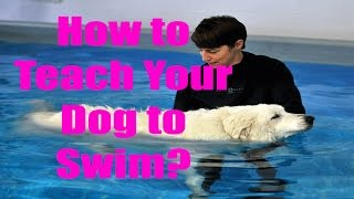 ►►how To Teach Your Dog To Swim | Doggy Dan's Online Dog Training Free Viideo
