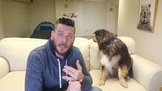 Austrailian Shepherd Review