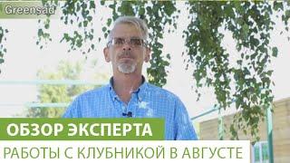 Работы с клубникой в августе(В этом видео наш эксперт расскажет, что делать с клубникой в августе. Купить саженцы клубники можно здесь..., 2015-09-18T08:55:04.000Z)