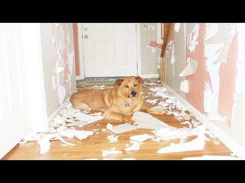 Funny Guilty Dogs Photos Compilation