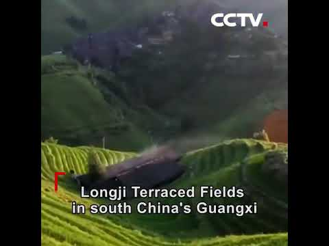"Longji Terraced Fields in south China's Guangxi Zhuang Autonomous Region are called a ""living fossil"