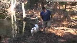 Kurgo Wander Dog Hammock - Combo Dog Seat Cover & Car Hammock