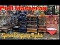 Masteran Pleci Bongkar Isian Cocok Untuk Burung Bahan  Mp3 - Mp4 Download