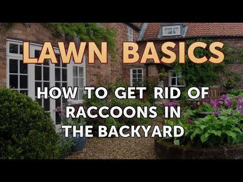 25 HQ Photos Get Rid Of Raccoons In Backyard / How To Get ...