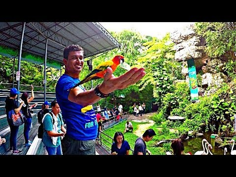 Safari World and Marine Park Bangkok | All Activities and im