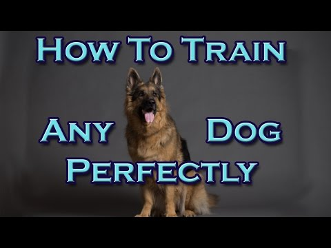 How To Train Any Dog Perfectly!
