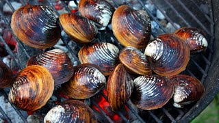 Eating BIG Oyster, MUSSEL & CLAM IN RIVER - COOKING Oyster, MUSSEL & CLAM EATING DELICIOUS
