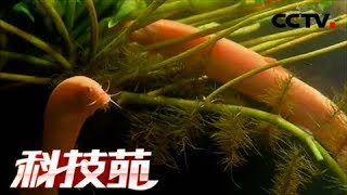 【Agricultural Technology】20171113 | CCTV Agriculture