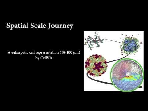 Molecular Visualization of Computational Biology Data: A Survey of Surveys (SoS MDV)