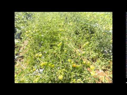 VEGETABLE DEMO FARM IN LEYTE