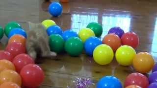 super cute kitten playing with coloured balls