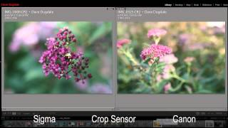 Canon 24mm f1.4 Mark II vs Sigma 24mm f1.8 Macro Lens Review - DSLR FILM NOOB