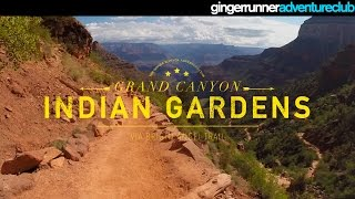 THE GRAND CANYON - INDIAN GARDENS | The Ginger Runner Adventure Club #4