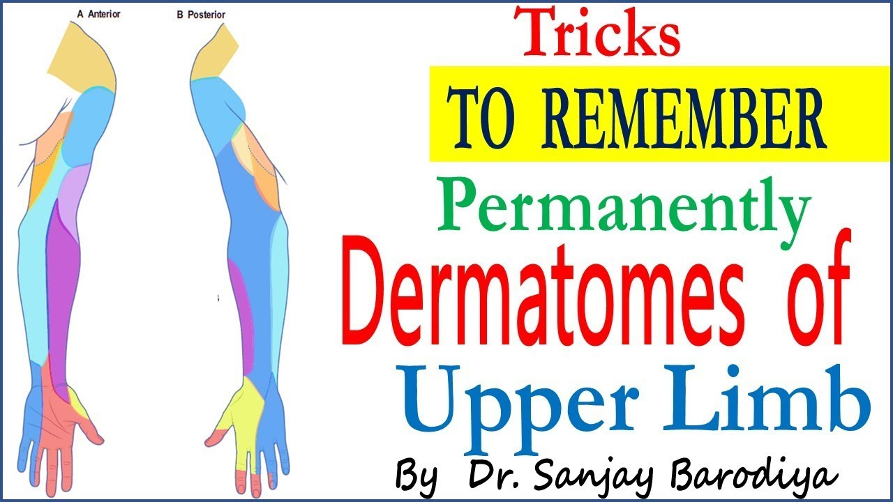 Trick to Remember DERMATOMES OF UPPER LIMB - YouTube