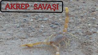 Akrepler Savaşı | The Scorpion King
