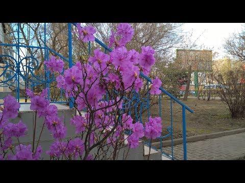 От Второй Речки до Постышева , Владивосток