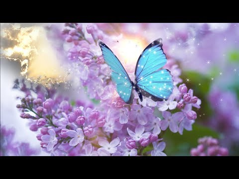 Peaceful Music,  Relaxing Music' Dedicated to Gemma Nuttall' by Nature With Music by Tim Janis