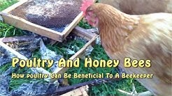 Using Poultry For Honeybee Pest Control
