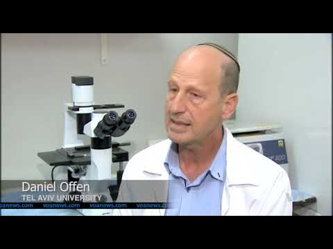 Stem Cells Get Paralyzed Mice Back On Their Feet