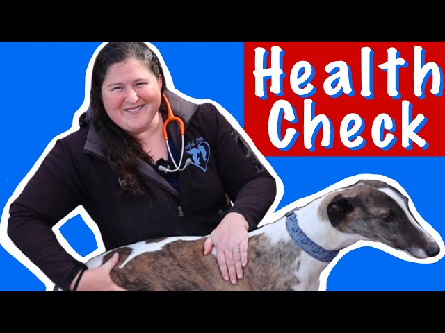 How to do a health check on a retired Greyhound