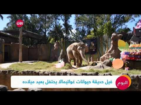 فيل حديقة حيوانات غواتيمالا يحتفل بعيد ميلاده  - نشر قبل 2 ساعة