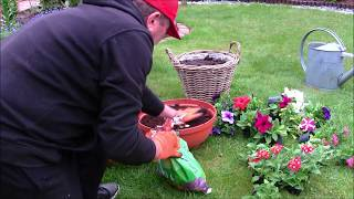 GARDEN 82 - Aphids on pink - We will sow cucumbers - Flower arrangements.