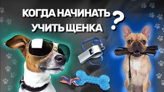С какого возраста начинать дрессировку щенка / When to start training your puppy