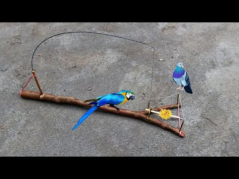 DIY creative best bird trap make from bamboo that works 100% | How to make bird trap | Bird trap |