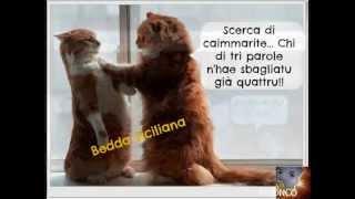 Sicilianu tipu stranu - Calandra &  Calandra- ( Dalla Sicilia con Furore 4 )