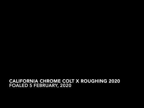 California Chrome Colt X Roughing 2020