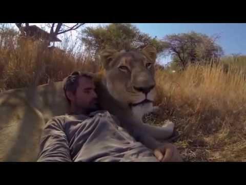 לא להאמין מדהים קווין ריצ'ארדסון - הלוחש לאריות. אריות בטבע