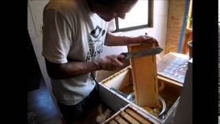 Honey Extracting Tips and Tricks