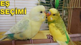 Muhabbet Kuşu Eş Seçimi - Yeni Eş Alırken Nelere Dikkat Edilmeli