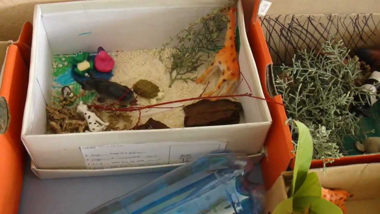 Habitat Project 3rd grade: Zoo in shoeboxes  YouTube