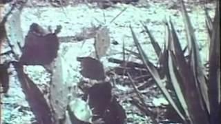 Marco Island 1964