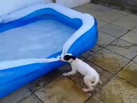 daisy dog meets the paddling pool youtube. Black Bedroom Furniture Sets. Home Design Ideas