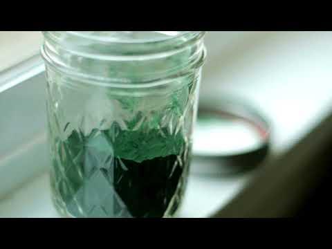 A dieta con Alga Spirulina.