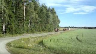 Hästkaravan i Dalsland 2010
