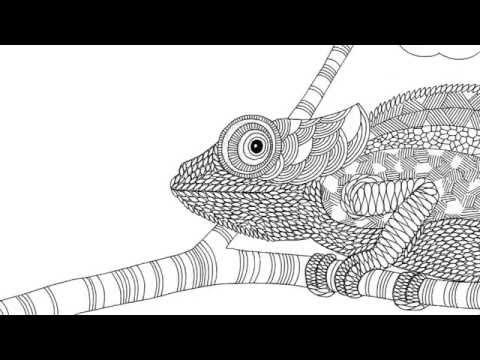 Hayvan Kralligi Youtube
