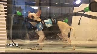 강아지 재활치료 : 서초 메디펫 동물병원