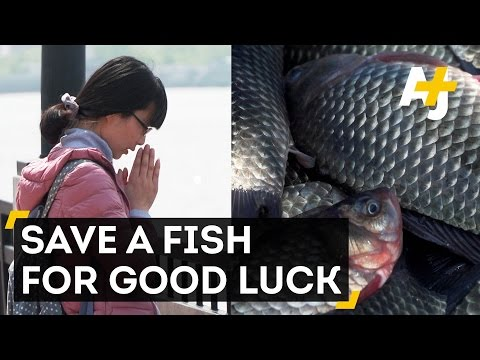 For Good Luck, Chinese Buddhists Release Tons Of Fish
