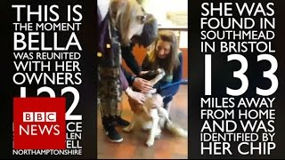 Home at last! Bella reuntied with family after being stolen 122 days ago - BBC News