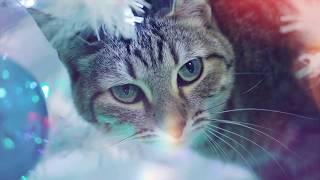 Кошка Сяма лезет на новогоднюю елку