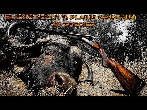 Thwane Safari's Africa Hunting Buffalo and 24 other Species.