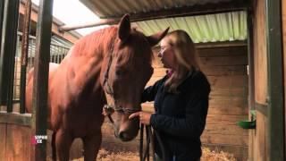Comment créer un lien avec votre cheval ? - Equidia Life