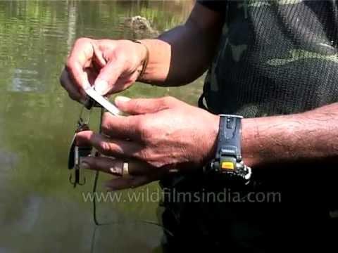 Fishing 101: Fishing In The Ramganga River In India