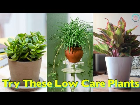 no-time-for-gardening-?-try-these-low-care-plants